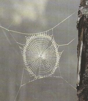 Ведьмины узелки и вера в духов
